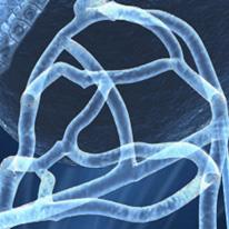 capillairesanguin_GP